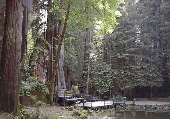 Bosque donde se realizan las reuniones del Bohemian Grove