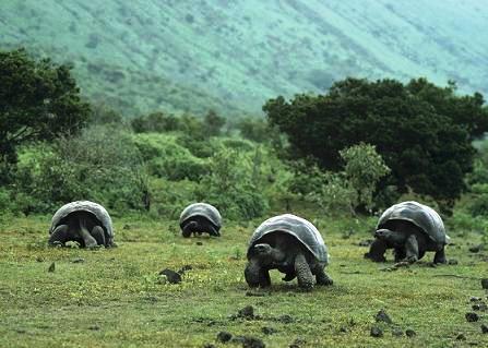 tortugas-islas-galapagos