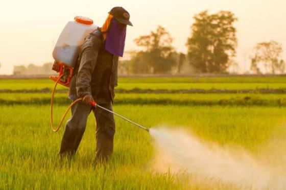 EU-agency-Weedkiller-glyphosate-unlikely-to-cause-cancer